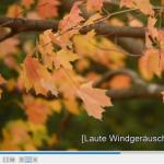 Ausschnitt Video mit Untertitel